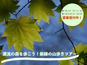 源流の森を歩こう!新緑の山歩きツアー